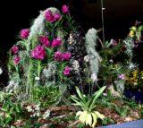 0089-Orchideenausstellung-Merzig.jpg