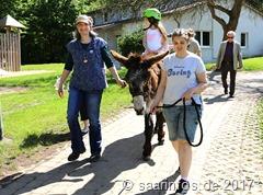 Hochbetrieb . Momo Langohr - der Ritt auf dem Esel war für die Kleineren ein besonderes Erlebnis