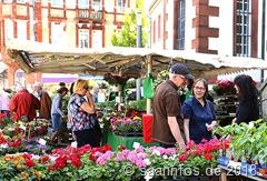 Merziger Blumenmarkt mit weiter steigender Beliebtheit