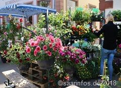 Merziger Blumenmarkt mit vielfältigen Angeboten 4495