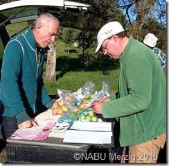 Sortenbestimmung im NABU-Apfelsortengarten  b
