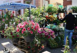 Der Merziger Blumenmarkt