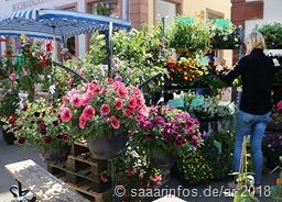 Blütenpracht und mehr in der Fußgängerzone