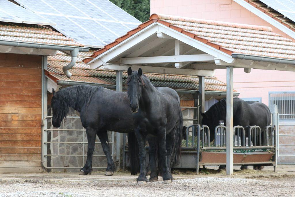 Stellenausschreibung Weihermühle Pferde