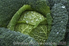 cabbage-4513641_1920-3_thumb18