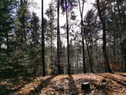 Winterliche Impressionen 5