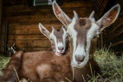 Türöffner Tag im Merziger Tier- & Arche Park