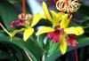 Orchideentage_6442