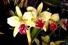 Orchideentage_6452