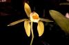 Orchideentage_6453