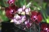 Orchideentage_6455