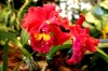 Orchideentage_6475