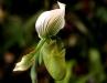 Orchideentage_6477